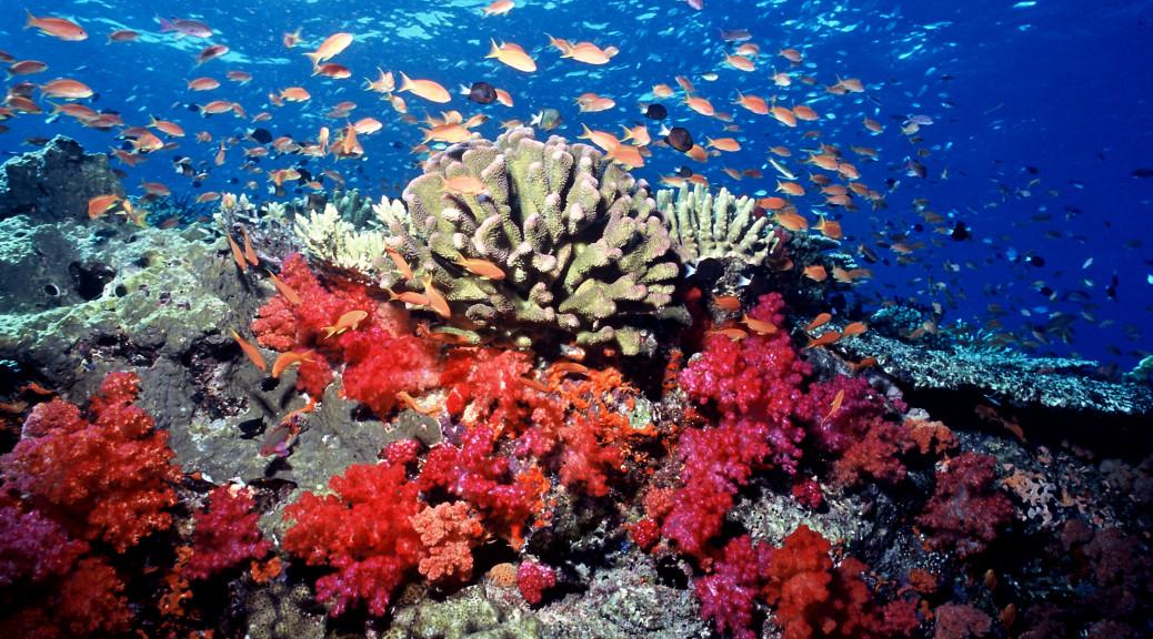 Koralrev marine park malaysia